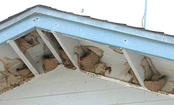 Birds Pest Control Sydney