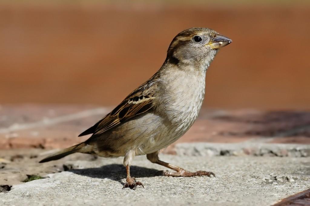 Professional Bird Management Services