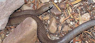 Explore Snake Control Methods in Back Forest