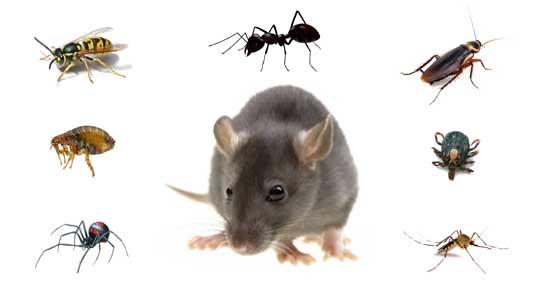 Pest control in Parramatta