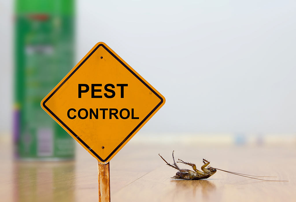 We can handle all common types of pests