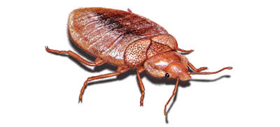 Pest Control Bed Bugs in Sydney