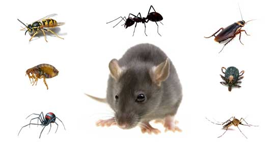 Bradbury Ant infestations, Bed Bug infestations, Cockroach infestations, German Cockroach infestations, Pest Inspection, Rat infestations, Spider infestations, Termite infestations