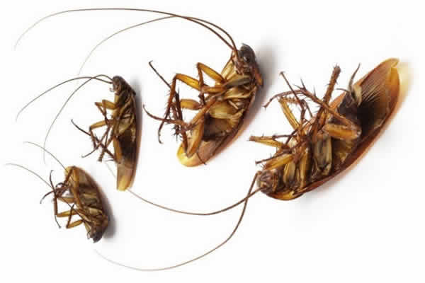Cockroach Management for Office Area