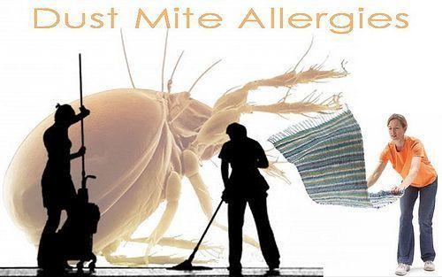 dust mites management