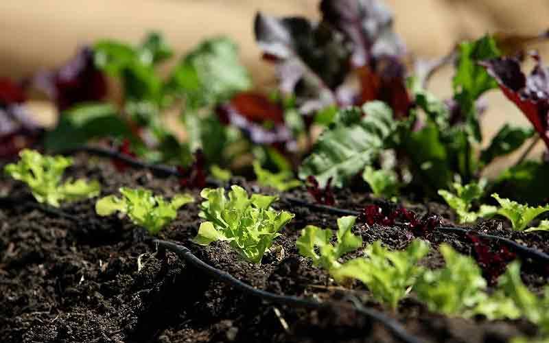 Organic Pest Management Sydney Australia