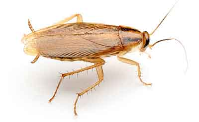 Pest management cockroach