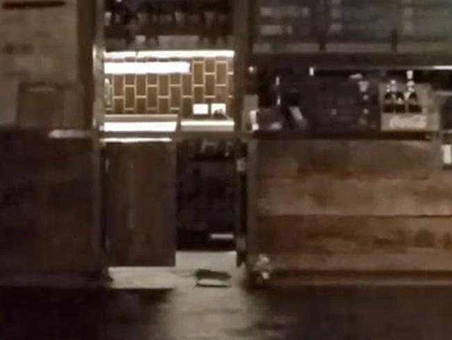 rat roaming around food court