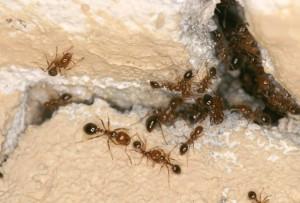 school common pests