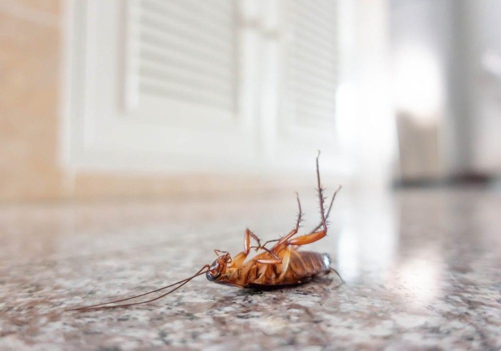 cockroach pest control Syndey exterminators