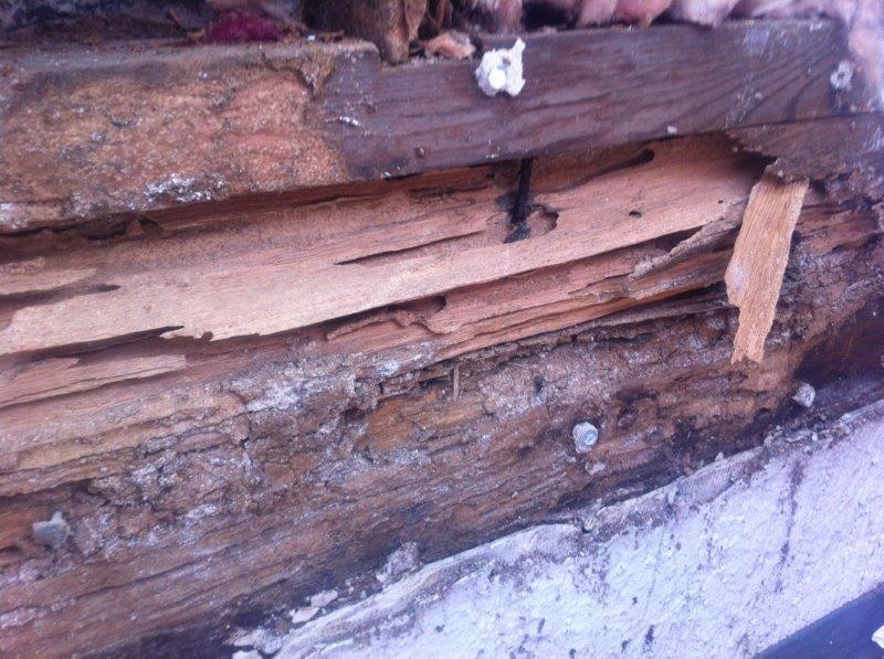 home termite control