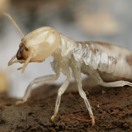 Epping - Winter Termites